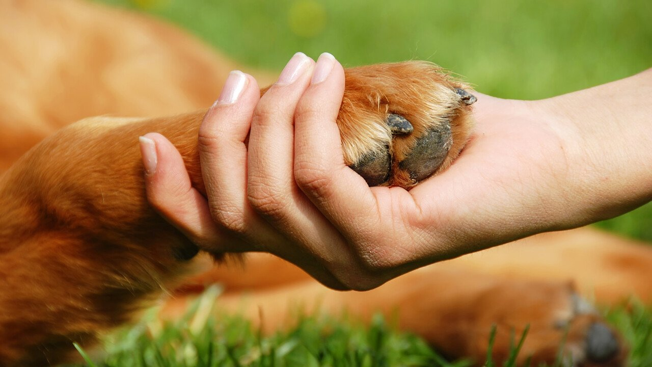 Frauenhand mit Hundepfote