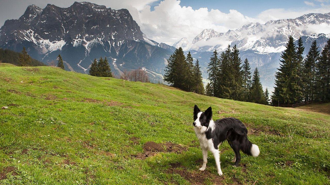 Hund in der Berge