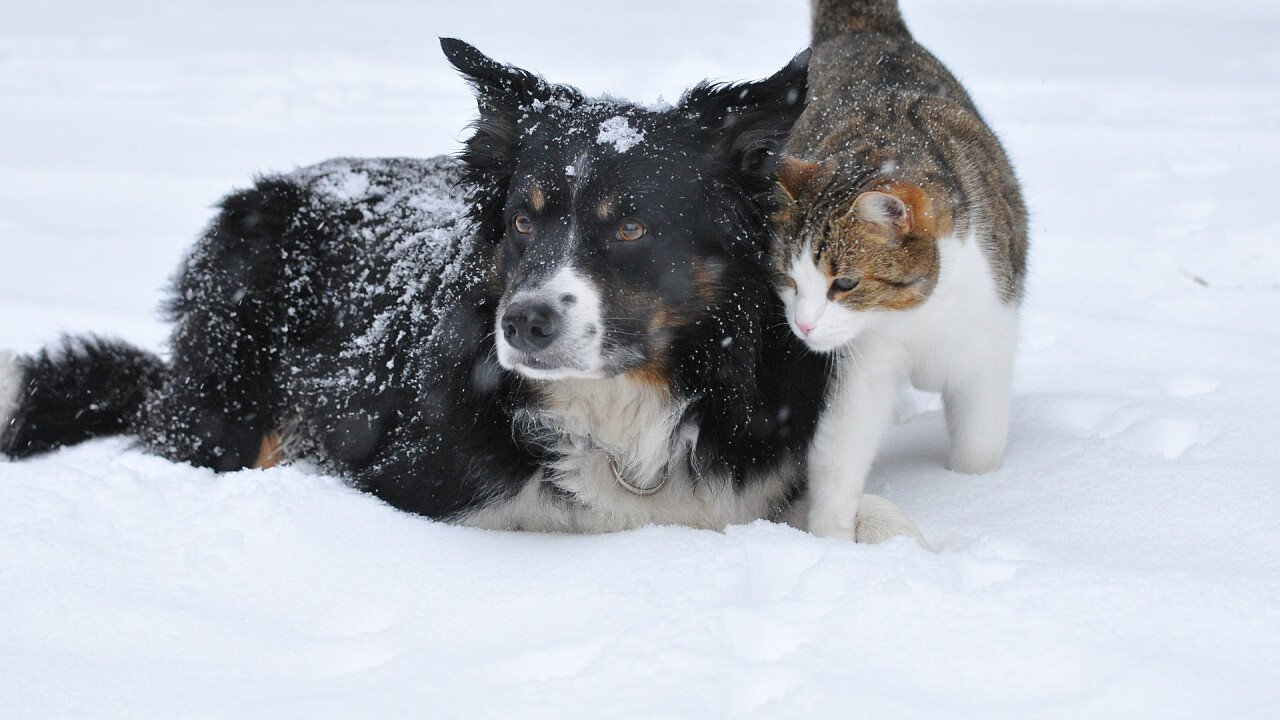 Hund und Katze im Schnee
