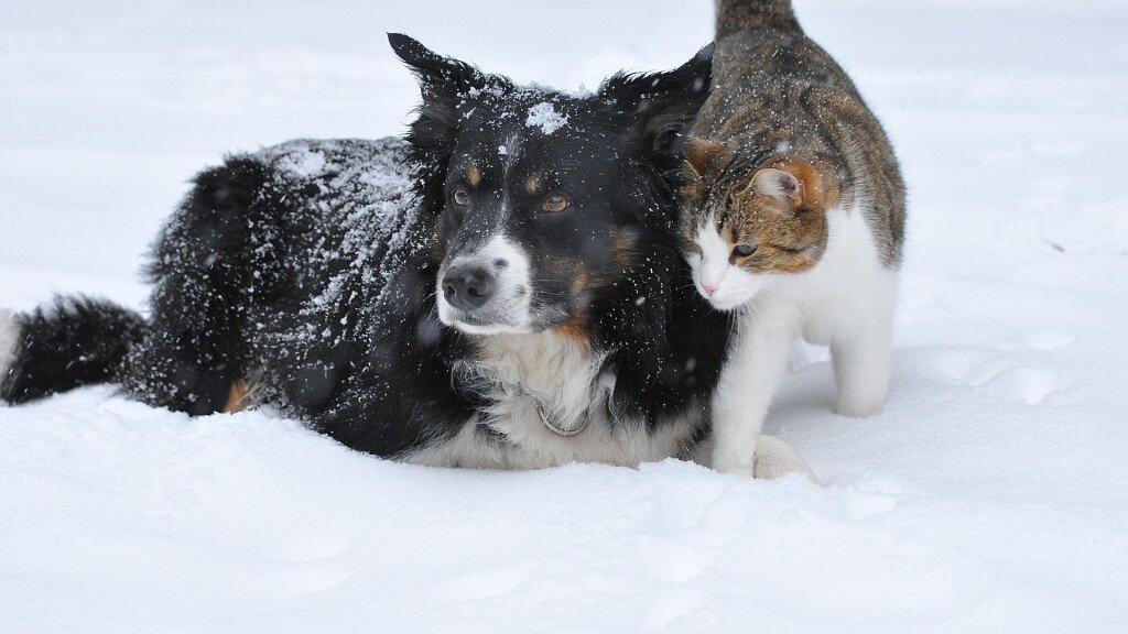 Urlaub in den Dolomiten in Haustierfreundlichen Hotels - cover